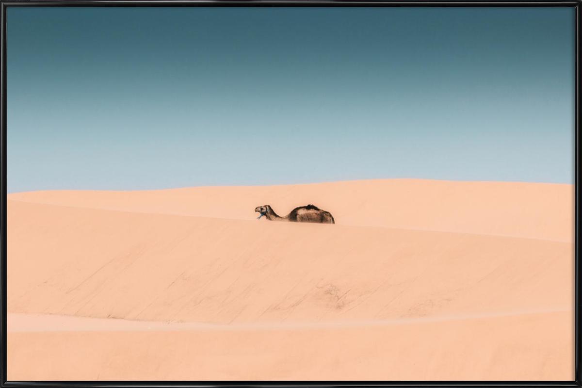 Lone Camel -Bild mit Kunststoffrahmen