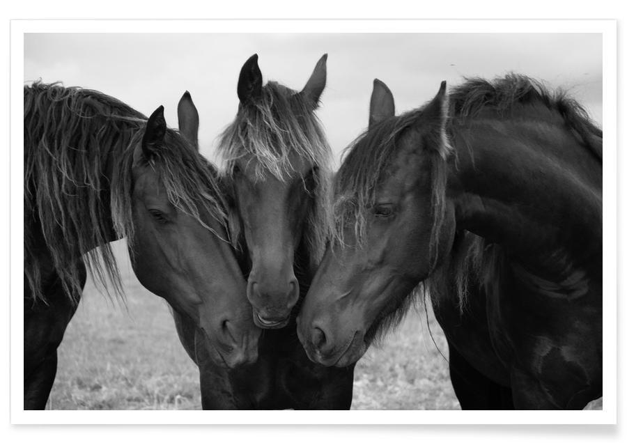 Black and White Horses Poster