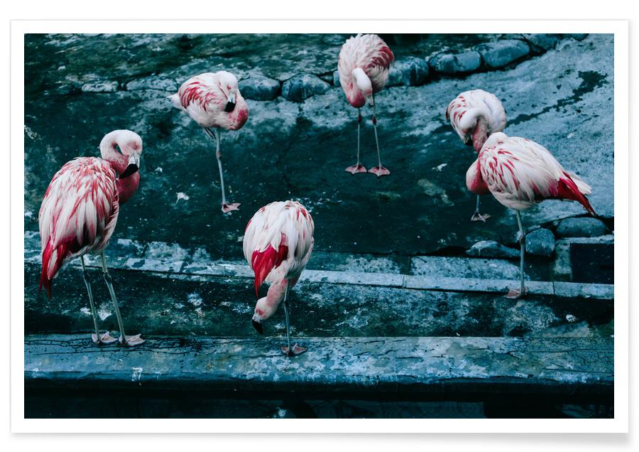 Flamingos by @esspeshal Poster