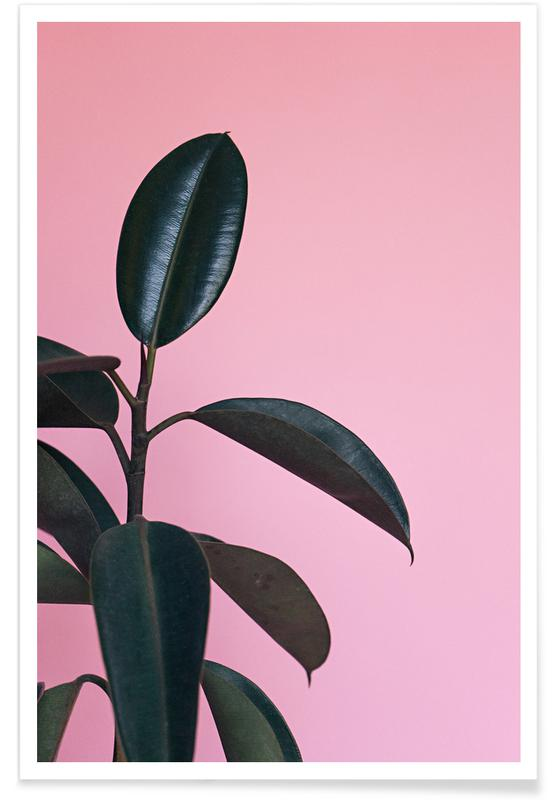 Ficus on Pink by @scottywebb poster