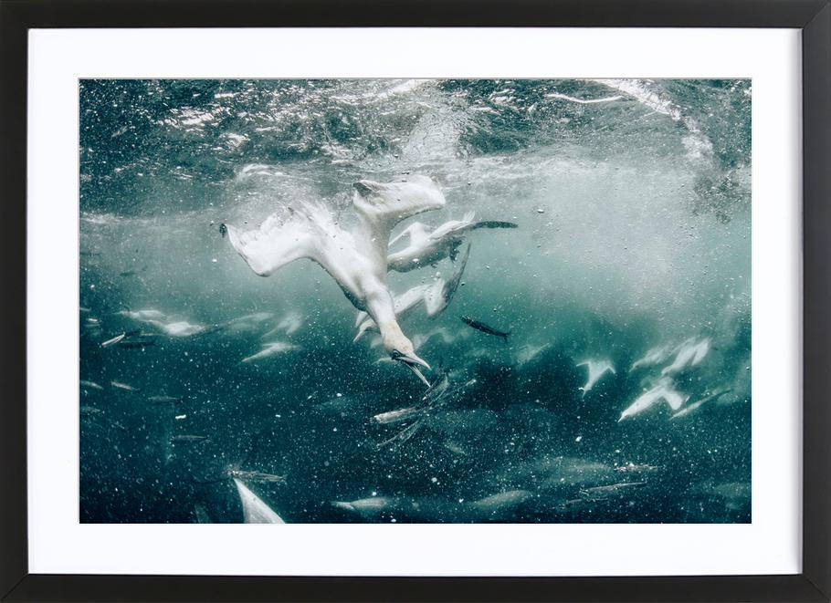 Battle by @JimmySong1 Framed Print