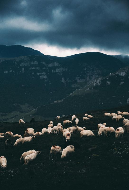 Ride out the Storm by Szabo Ervin-Edward Aluminiumtavla