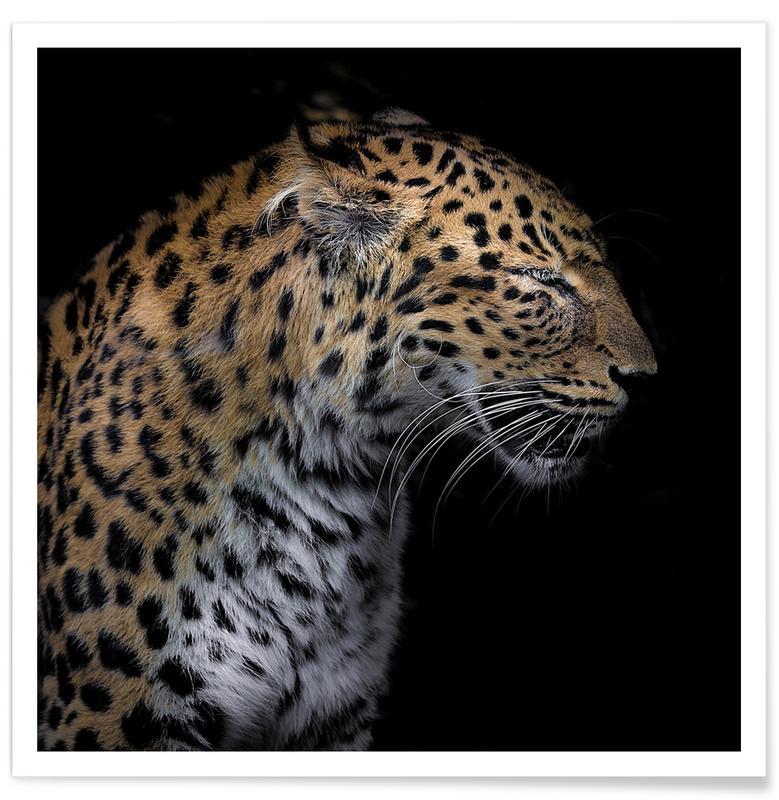 Leopard Profile by Lothare Dambreville Plakat