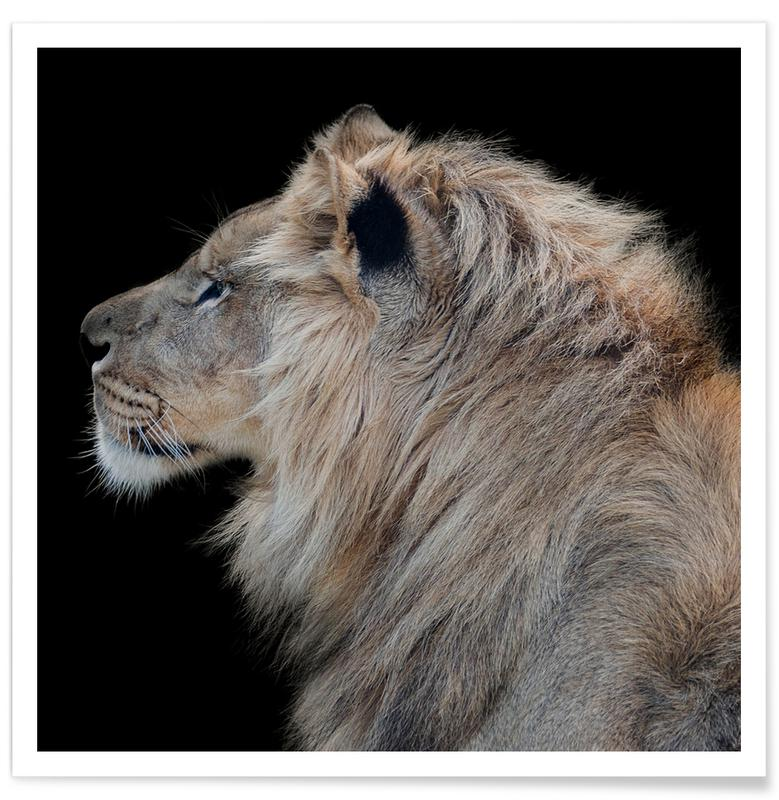 Lion Profile by Lothare Dambreville Poster