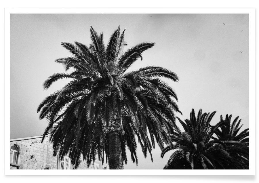 Black and White Palms Poster