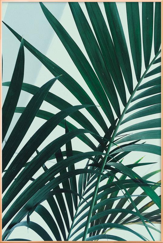 Palm Leaves Poster in Aluminium Frame
