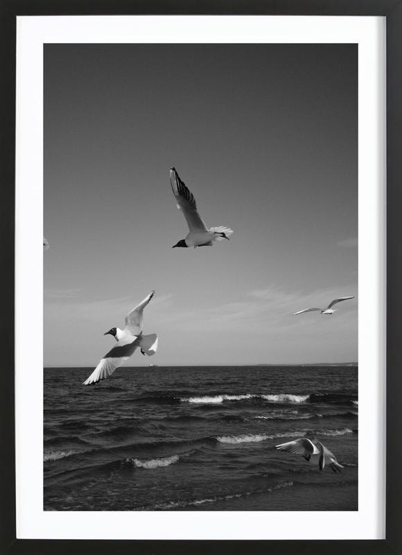Seagulls III Framed Print