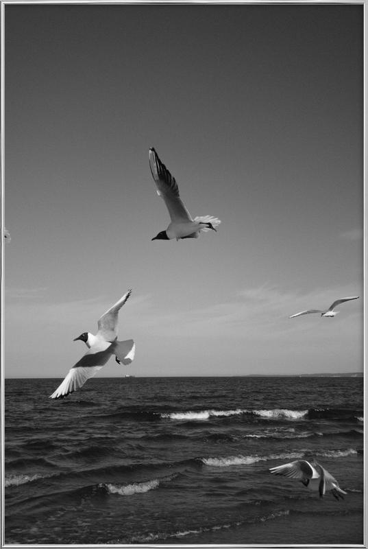 Seagulls III -Poster im Alurahmen