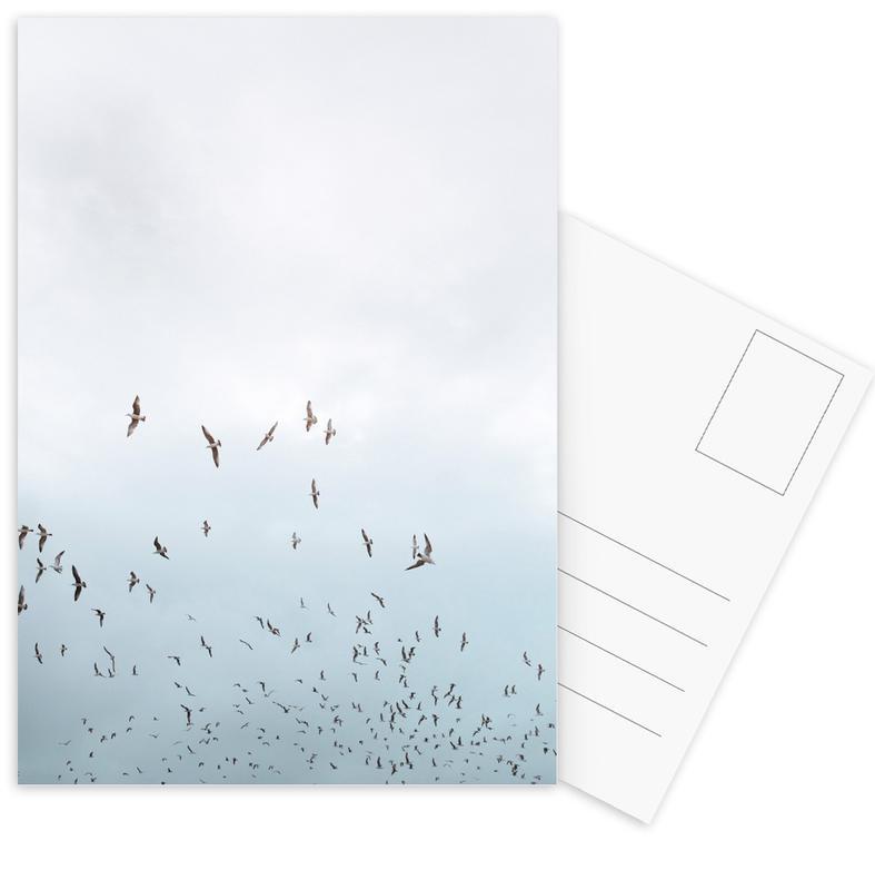 Birds in Porto Postcard Set