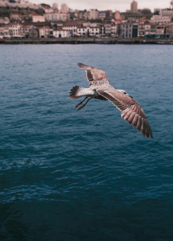 Seagull in Porto -Leinwandbild