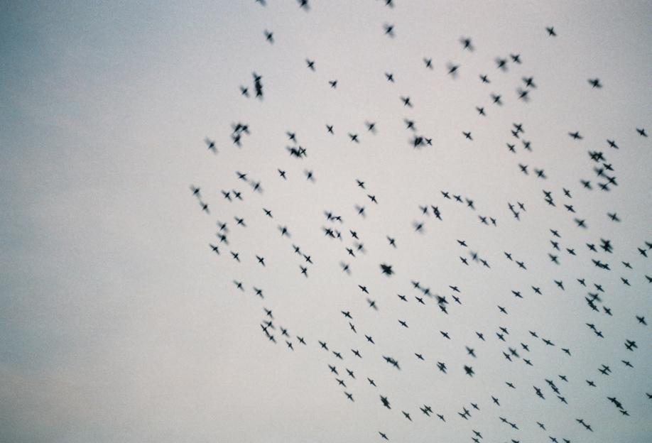 Wild and Free -Acrylglasbild