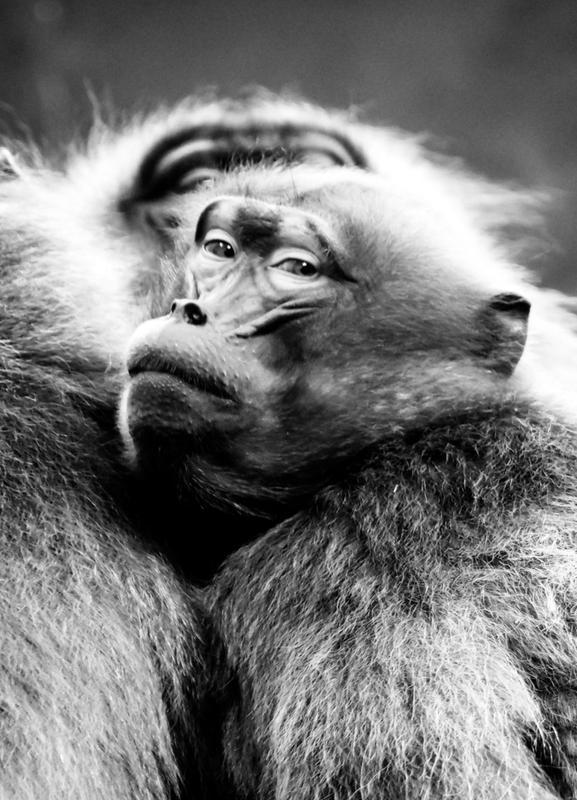 Monkey Business -Leinwandbild