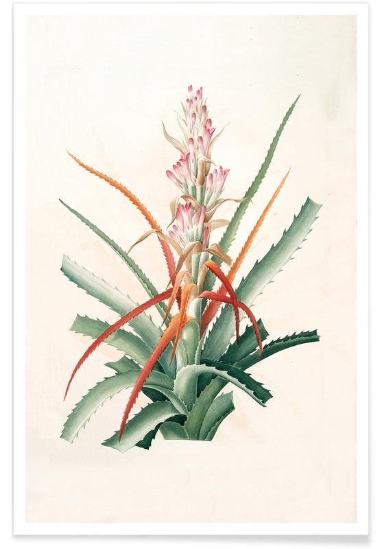 Ananas sauvage, Bromelia Pinguin Poster
