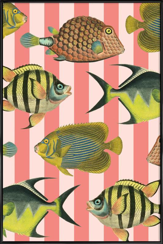 Pattern Fish Stripes affiche encadrée