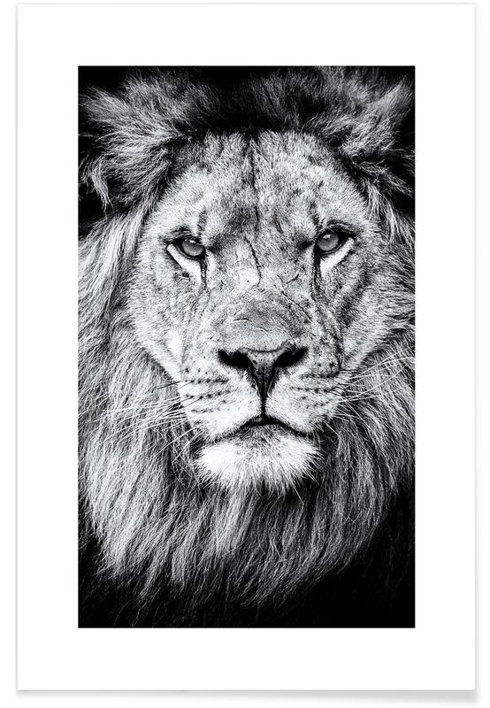 Portrait of a Regal Lion Poster