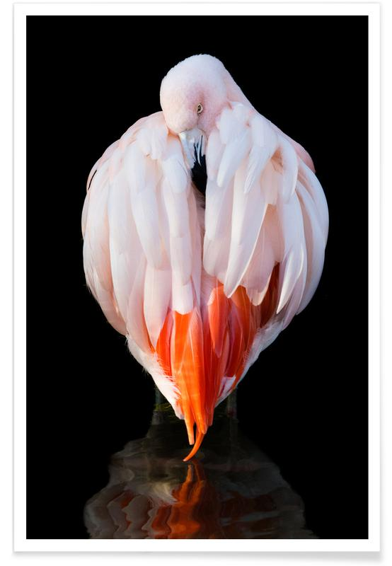 Flamingo in Reflection Poster