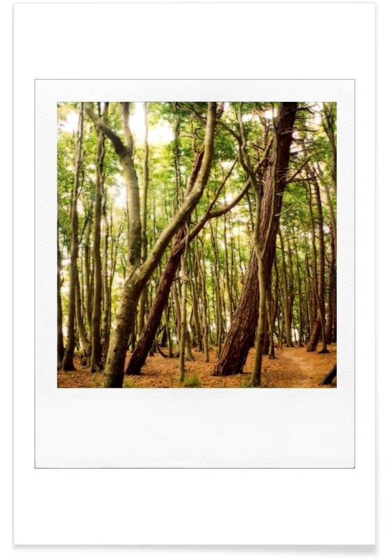 Forest affiche