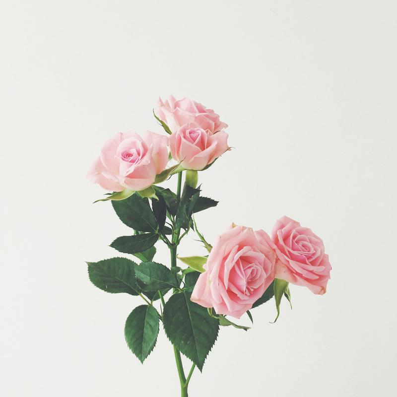 Spring Roses -Leinwandbild