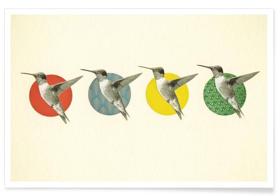 The hummingbird dance affiche