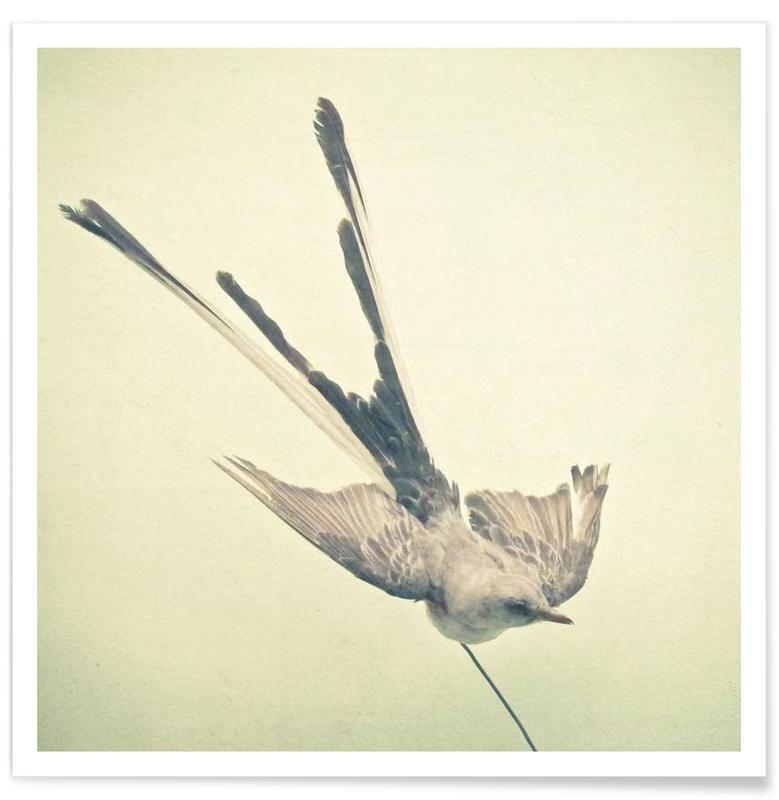 Bird study #1 poster