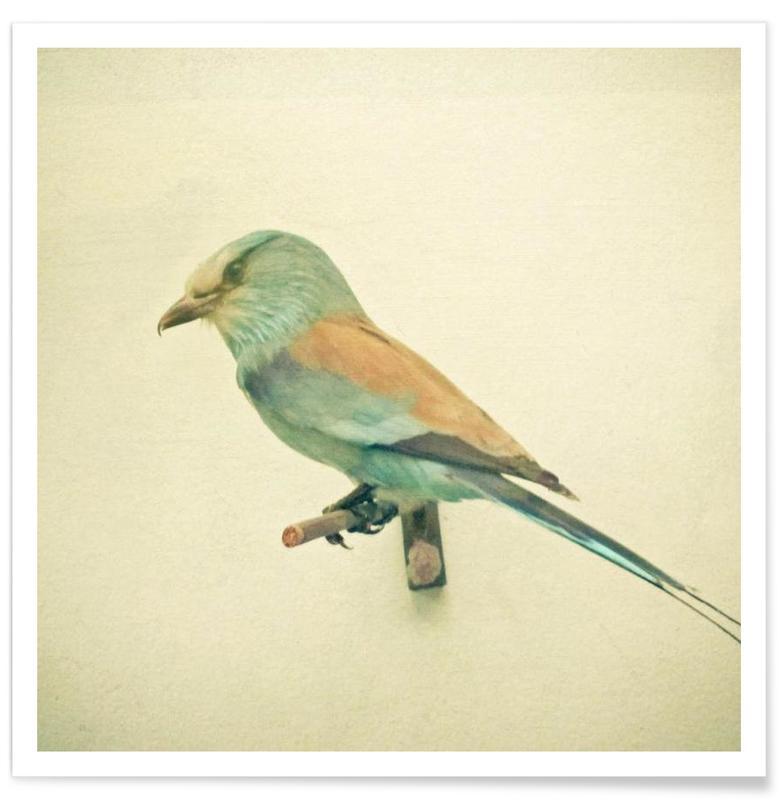 Bird study #2 Poster