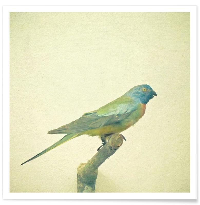 Bird study #3 affiche