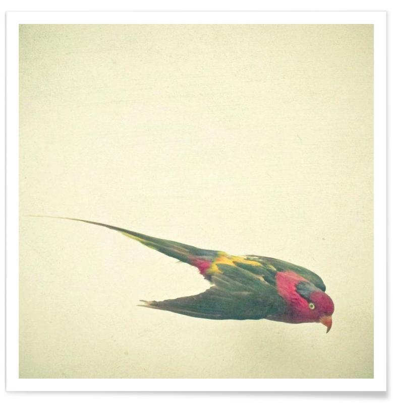 Bird study #4 affiche