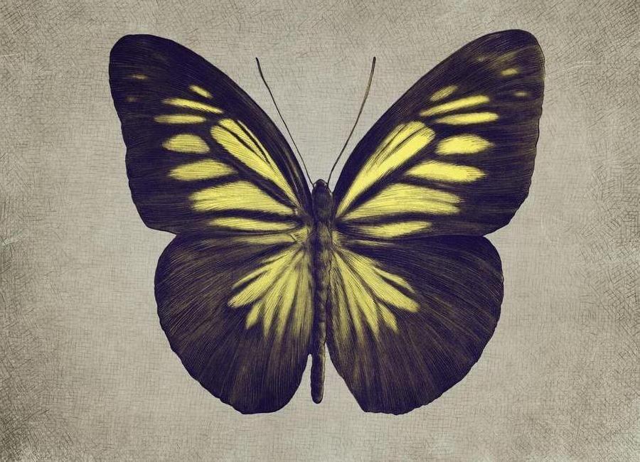 Papillon (yellow) -Leinwandbild
