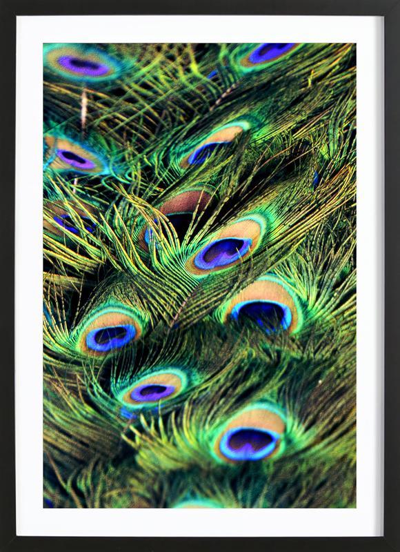 Peacock Plumes Framed Print