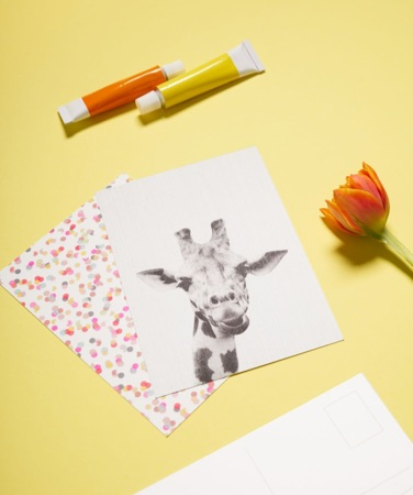 postcards with polkadot and giraffe designs