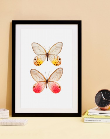 juniqe poster of two butterflies in black wooden frame