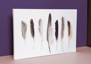 Canvas print with a feather design