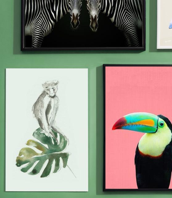 Drie juniqe posters met apen, zebra's en toekans.