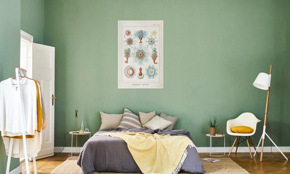 Tafel 17 - Haeckel als Poster im Kunststoffrahmen | JUNIQE